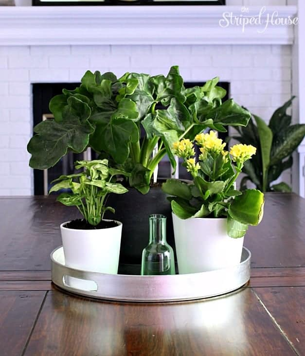 plants dining room eclectic summer home tour